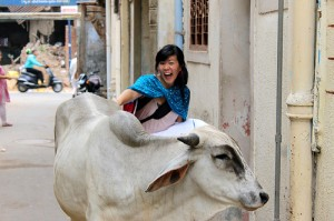 Hui following cows during her internship in Gujarat in the summer of 2011